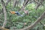 In the jungle, Bardia