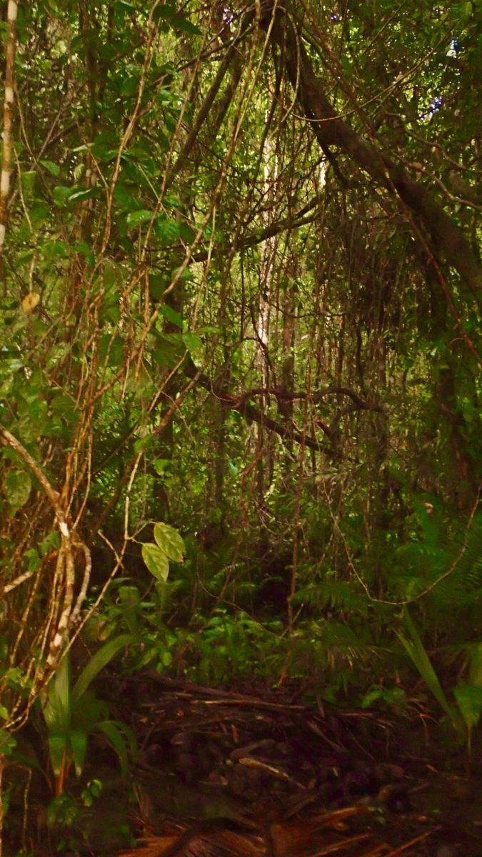 Jungle, Piedras Blancas, CR